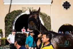horse racing del mar racetrack events 7