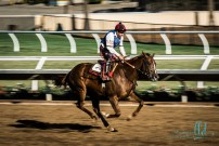 horse racing w (7 of 47)