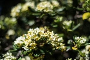 flowers bee yellow jacket