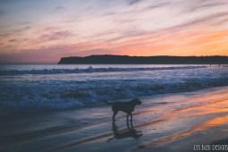 sunset dog beach coronado