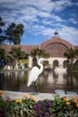 balboa park (8 of 108)