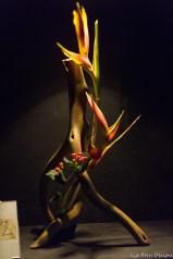coronado flower show w (101 of 240)