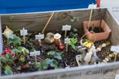 coronado flower show w (126 of 240)
