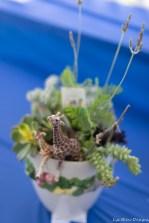 coronado flower show w (130 of 240)