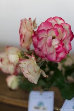 coronado flower show w (162 of 240)