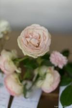 coronado flower show w (174 of 240)