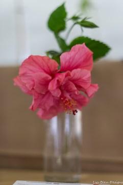 coronado flower show w (19 of 240)
