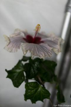 coronado flower show w (194 of 240)