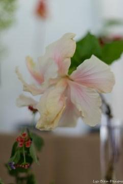 coronado flower show w (20 of 240)