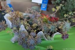 coronado flower show w (222 of 240)