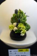 coronado flower show w (29 of 240)