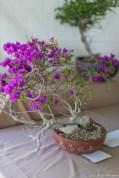 coronado flower show w (86 of 240)