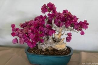coronado flower show w (92 of 240)