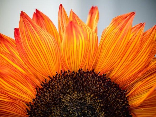 Gratitude: Your Secret to a Joyful Love Filled Life