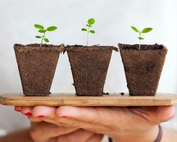 Coaching Growth Arcs – Thoughtful Development of Our Coaching Mindset
