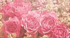 様々なピンク色の花 ピンクはエレガントな色 フェミニンな色