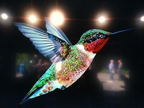 1380220316000-hummingbird-google1