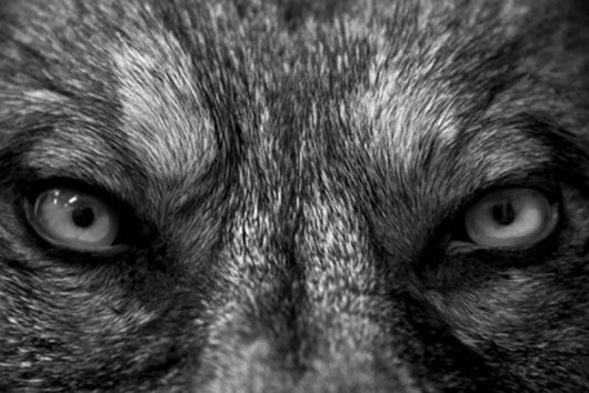 Dog-Bite-Evil-Eyes