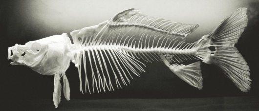 fish_bones_by_planet37-d3dcsd1
