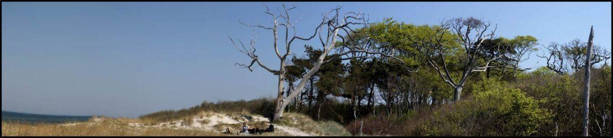 Ostseestrand bei Warnemünde