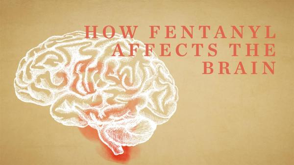 How Fentanyl Affects the Brain
