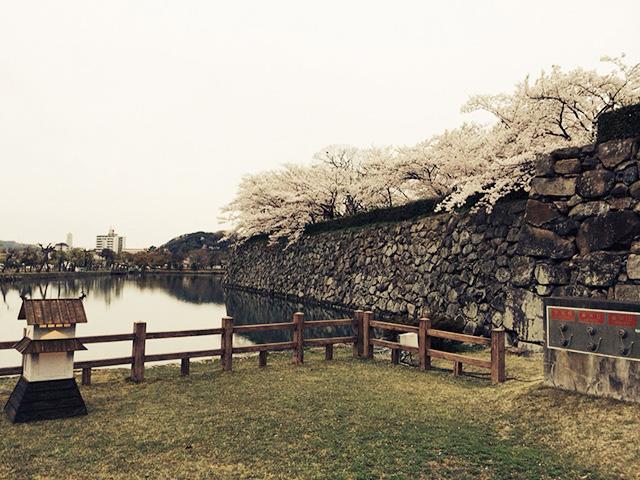 姫路城の桜01
