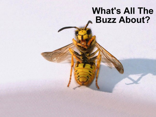 funny_insect_wallpaper.jpg