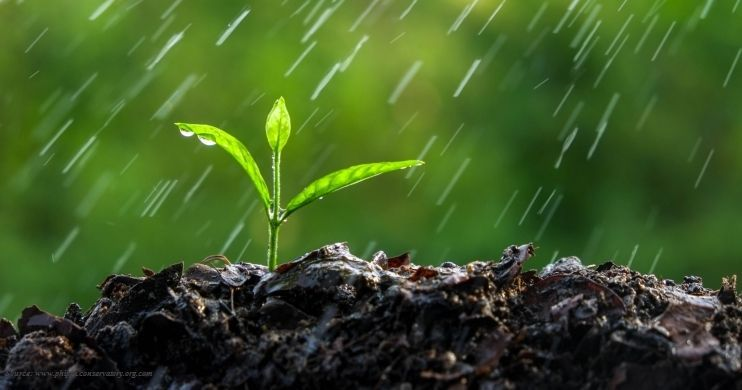 What causes smell after first rain from the soil?