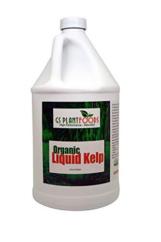 Liquid Kelp Organic Seaweed Extract 1 Gallon Fertilizer Concentrate