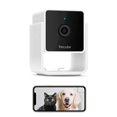 Cat observation camera