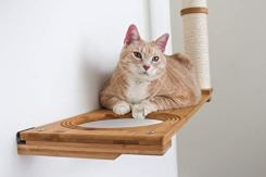CatastrophiCreations-Dakota-Set-for-Cats-Multiple-Level-Wall-Mounted-Scratch-Hammock-Lounge-Play-Climbing-Activity-Center-Furniture-Cat-Tree-Shelves-NaturalCharcoal-Gray