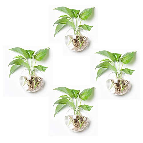 Pack of 4 Glass Planters Wall Hanging Planters Round Glass Plant Pots...