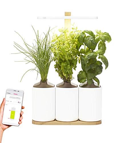 Lilo Connect, le potager d'intérieur connecté de Prêt à Pousser - Cultivez toute l'année simplement - Inclus Basilic, Menthe et Ciboulette