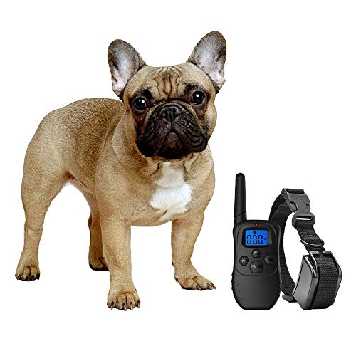 eXuby Shock Collar for Small Dogs with Remote - Includes 2 Collars - Small & Medium and Training Clicker – 3 Modes (Sound, Vibration & Shock) with Rechargeable Batteries