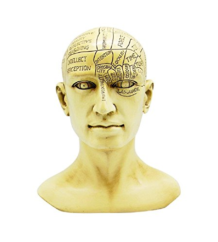 Fantasy Gifts Phrenology Human Head Skull Bust Figurine...