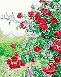 AOlsyh Flor roja DIY Kit de Pintura Digital DIY Principiantes Adultos Pittura acrilica per con PaintsKits 40x50cm Frameless
