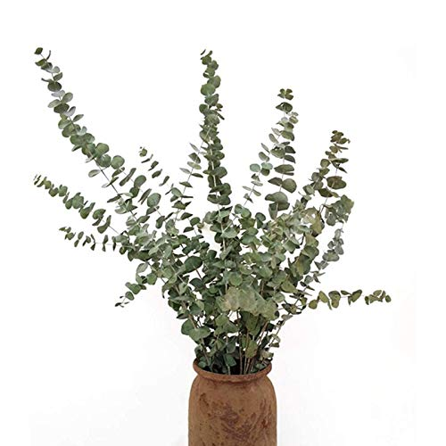 10 ramas de flores de eucalipto nórdico secas, únicas y el