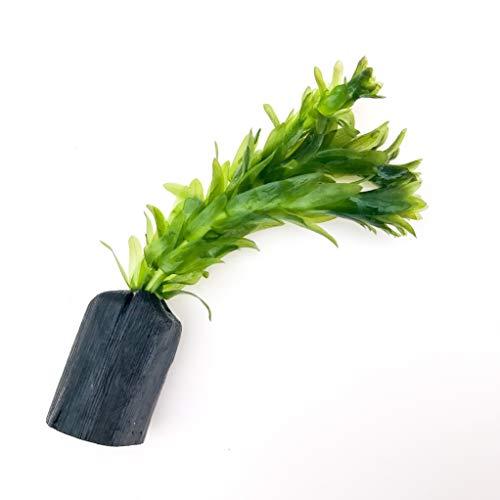 アナカリス 備長炭ポット植え 1個(水草3~4本入・国産)無農薬