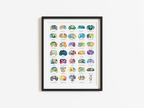 Veterinary Gift - 16' x 20' Medical Wall Art Decor -...