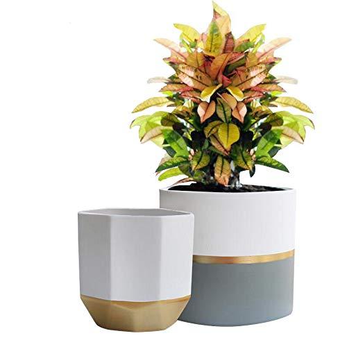 La Jolié Muse White Ceramic Planters