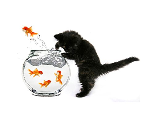 The Art Stop Photo Black Kitten CAT Goldfish Bowl Framed Print F12X2819
