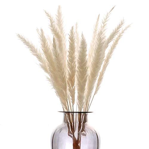 HUAESIN 30Pcs Pampas Secas Grass Flores Secas Naturales Blan