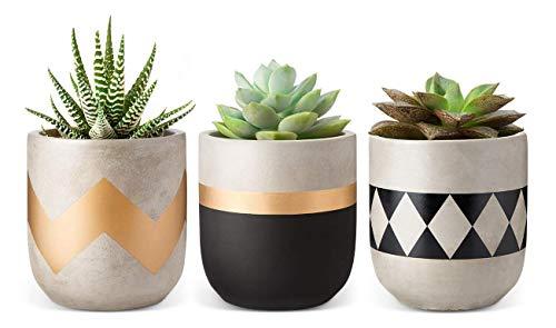 Mkouo 10cm Zement Succulent Pflanzen Modern Blumentöpfe Mini Pflanzen Innen for Cactus Herb or Small Plants, 3er-Set