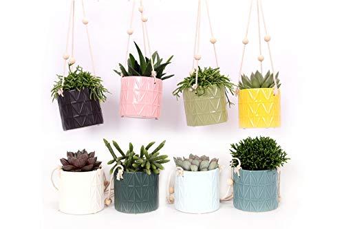 Cactus et plantes grasses de Botanicly – 8 × Succulents – Hauteur: 10 cm – Succulentus Mini