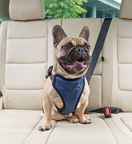 PetSafe Happy Ride Certified, Crash-Tested,...