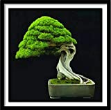 rbol De Hoja Perenne Bonsai Diy Pintura Diamante Punto De Cruz Diamante Bordado Diamante Diamante Set De Decoracin De Regalo 30X30