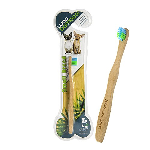best toothbrush for Chihuahua