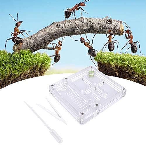 Hormiga granja acrílico caja de cría de hormigas transparente...
