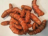 Turmeric Whole Raw Root (1 Pound)