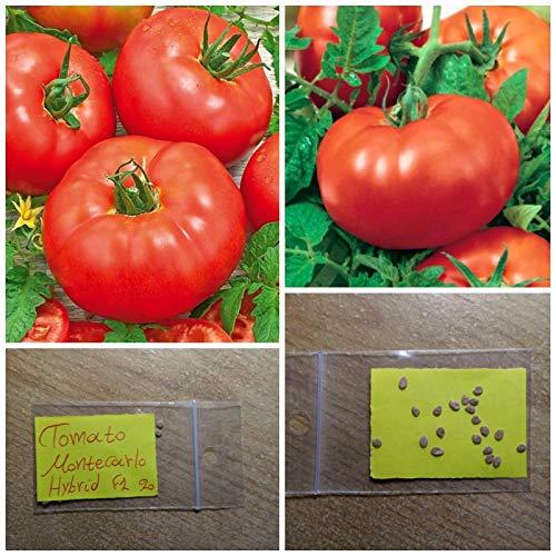 Pomodoro '' F1 Montecarlo '' HYBRID ~ 20 semi di alta qualit - rosso dolce frutto di grandi dimensioni